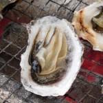 妊娠中に牡蠣を食べちゃいけないの?